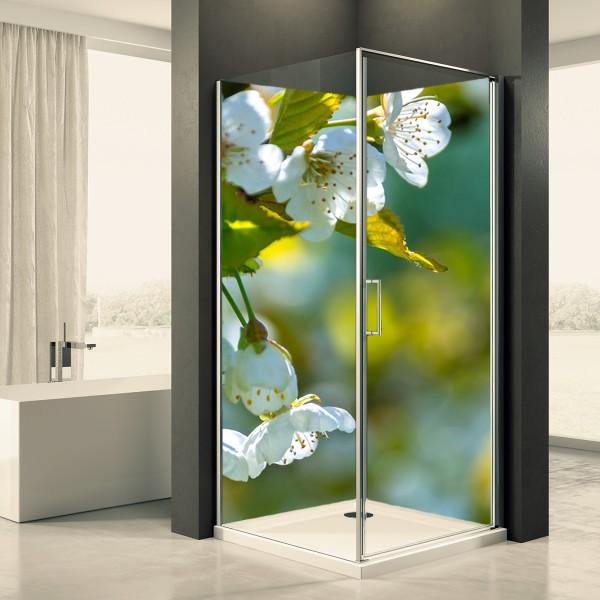 Duschrückwand Motiv 0007 Apfelblüte