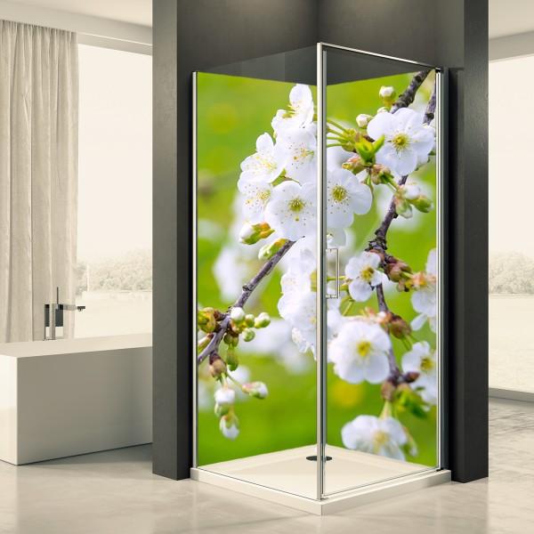 Duschrückwand Motiv 0008 Apfelblüte 2